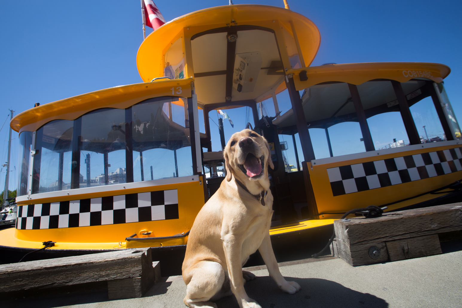 Winston taking a water taxi in Victoria